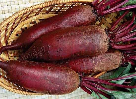 barbabietola rossa lunga