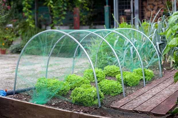 Come costruire una serra sul balcone - Idee Green