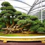 Come prendersi cura di un bonsai idee green - Cura dei bonsai in casa ...