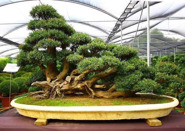 come curare un bonsai in casa