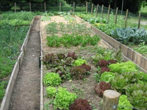 orto-biologico-lavori