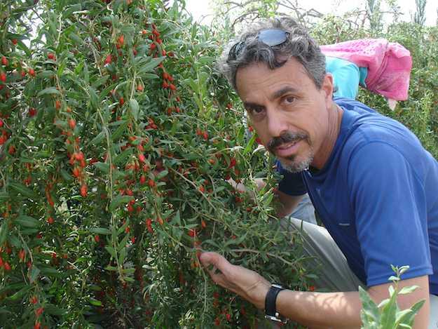 Come coltivare le bacche di goji consigli pratici idee for Coltivazione goji