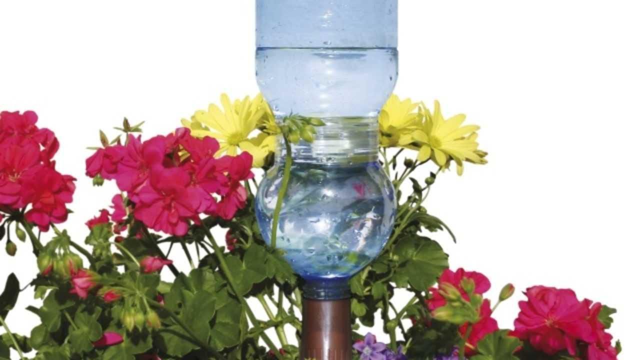 Bagnare Piante Con Bottiglie irrigatore a bottiglia, ecco come costruirlo - idee green