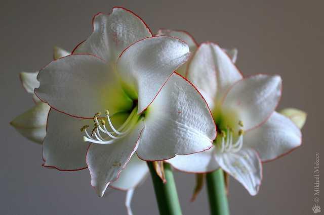 Quali sono le migliori piante da appartamento idee green - Piante fiorite da appartamento ...