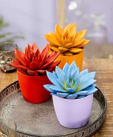 piante da appartamento belle