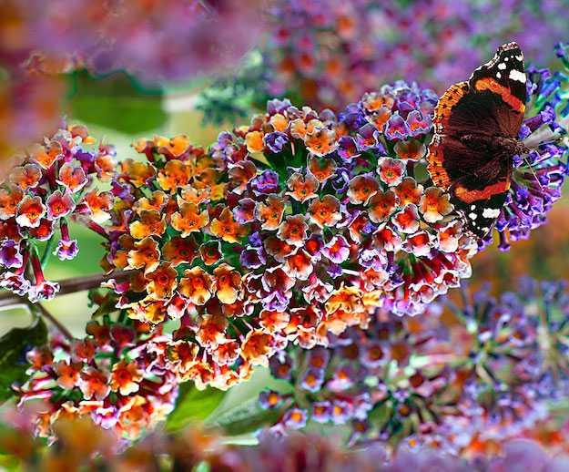 Piante da giardino fiorite idee green for Fiori sempreverdi da giardino
