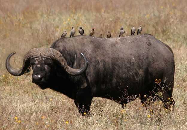 animali pericolosi in africa