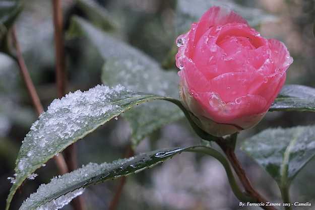 come riparare le piante dal freddo