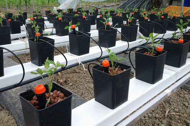 Sistema di irrigazione a goccia fai da te idee green for Orto pensile fai da te
