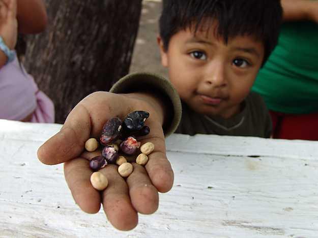permacultura sud america