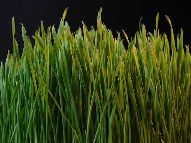 Piante da giardino sempreverdi idee green - Sempreverde da giardino ...