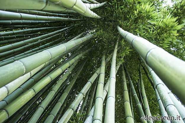 Come essiccare le canne idee green for Canne di bambu per arredamento