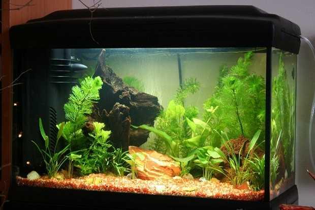 Acquario come pulirlo idee green for Fondo per acquario