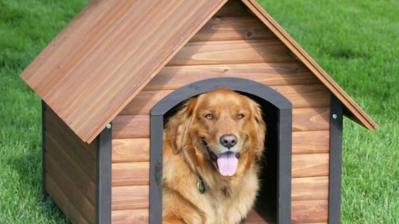 Come Costruire Una Cuccia Coibentata come costruire una cuccia del cane di legno - idee green