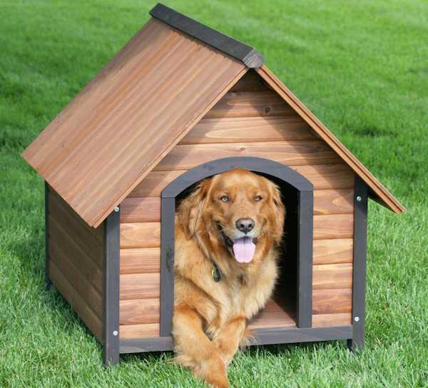 come costruire una cuccia del cane di legno idee green