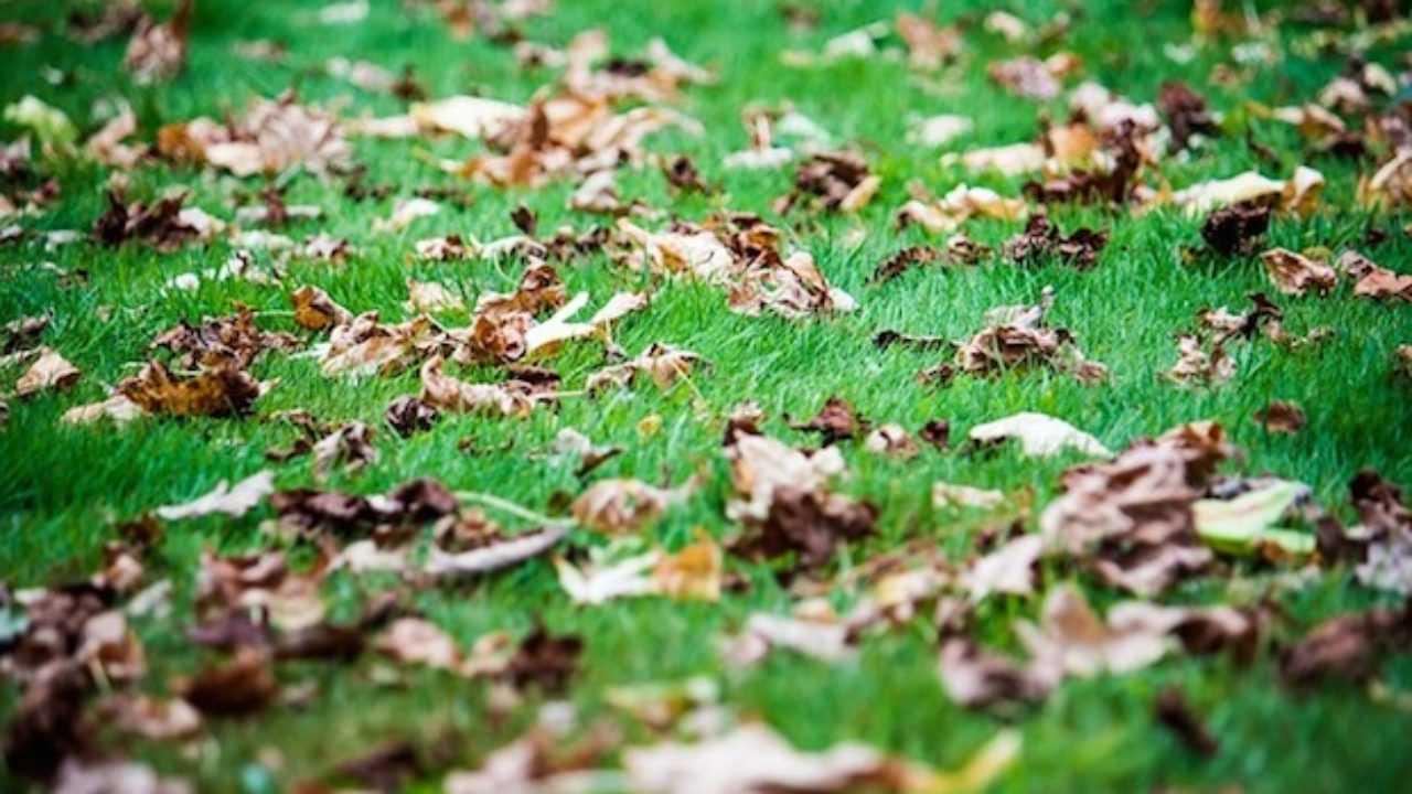 Concime Per Prato Autunnale come curare il prato in autunno - idee green