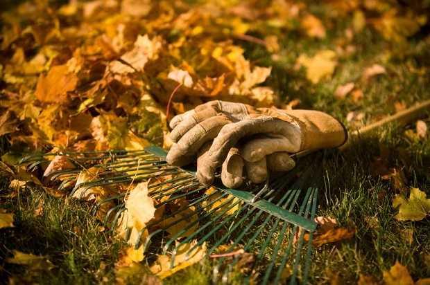 lavori in giardino a ottobre