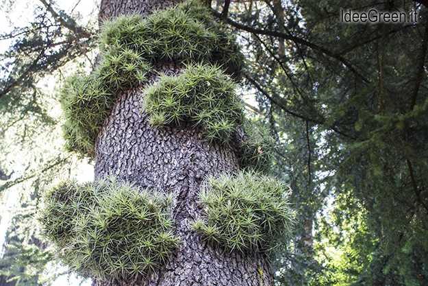 pianta purifica aria