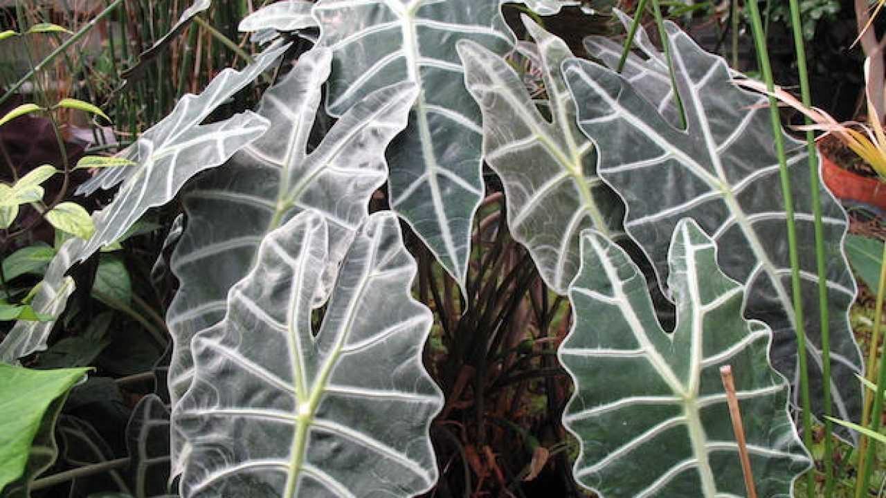 Rampicanti Che Crescono All Ombra piante da appartamento per stanze con poca luce - idee green