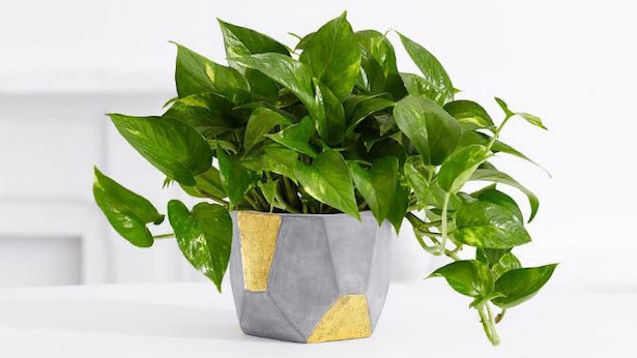 Piante Da Appartamento Di Facile Coltivazione.Piante Da Appartamento Resistenti Idee Green