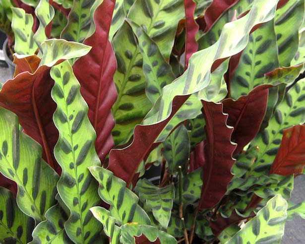 piante interno poco luminoso