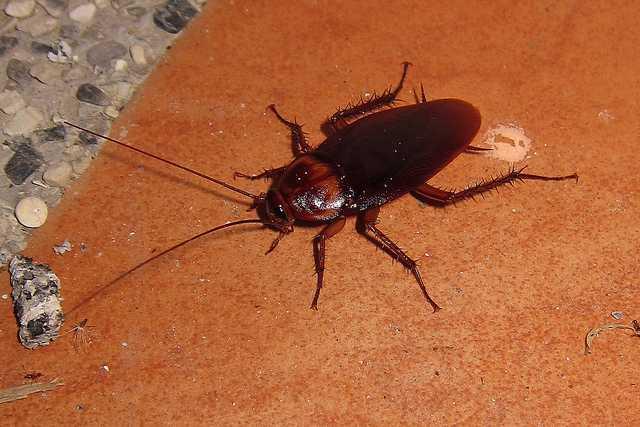 rimedi contro gli scarafaggi