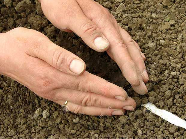 sementi a nastro