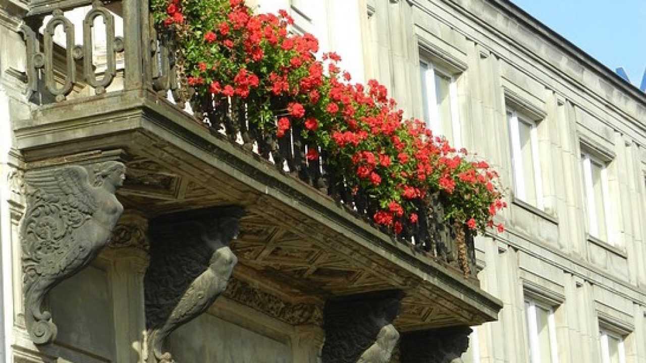 Piante Rustiche Da Balcone fiori da balcone, consigli per un balcone fiorito - idee green