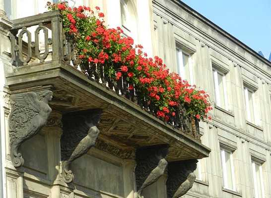 Fiori da balcone consigli per un balcone fiorito idee green for Piante da balcone perenni