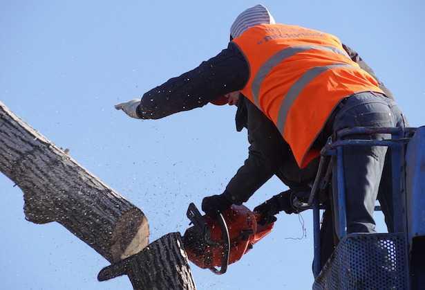 come si abbatte un albero