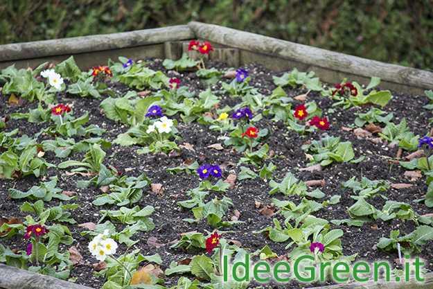 Fioriture invernali l 39 elenco delle piante idee green for Elenco piante sempreverdi