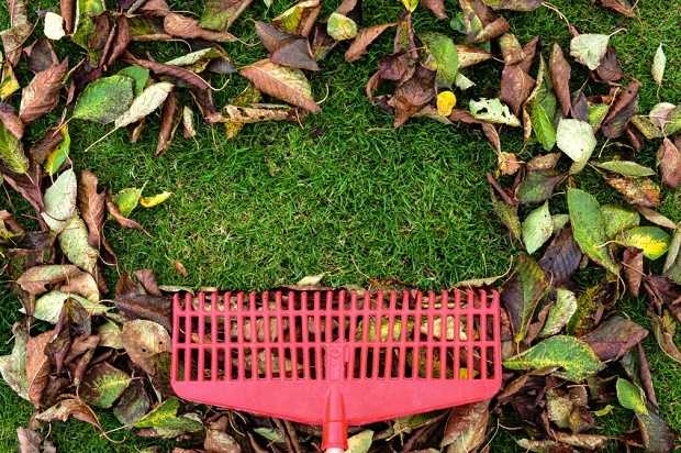 lavori di novembre in giardino
