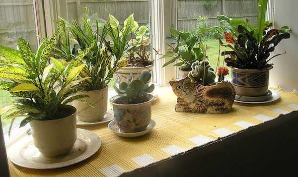 quando innaffiare le piante di casa - idee green