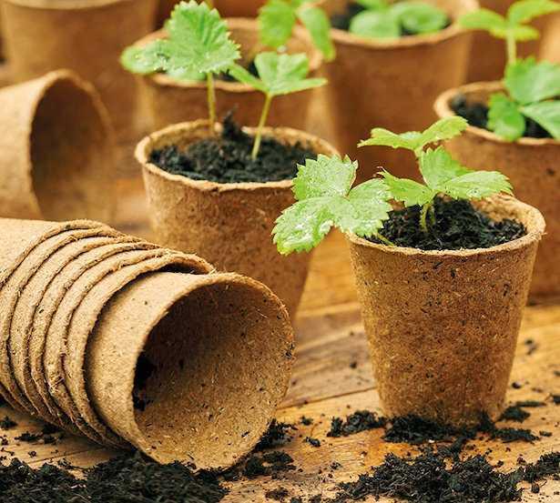 semenzai fai da te