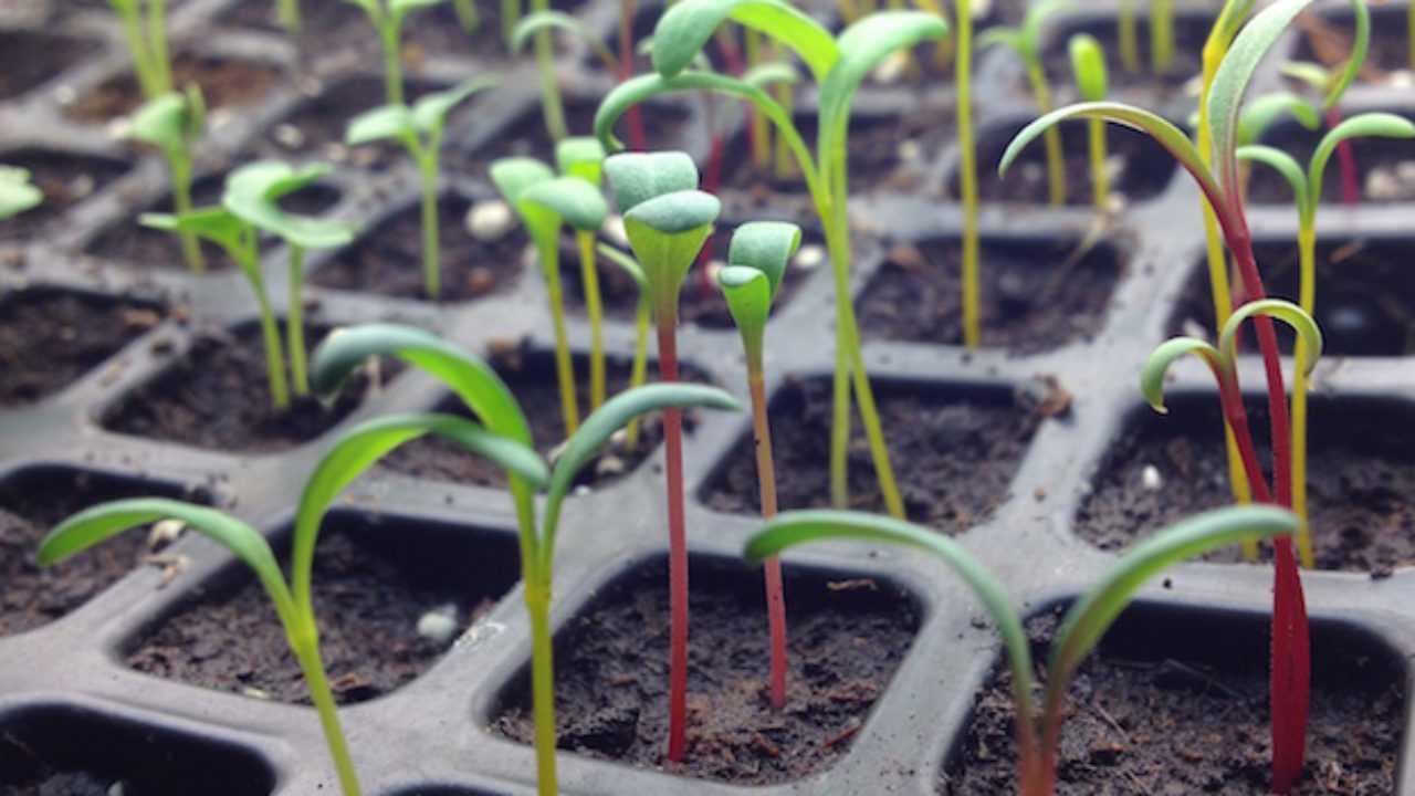 Costruire Una Mini Serra Riscaldata semina in semenzaio, la guida - idee green