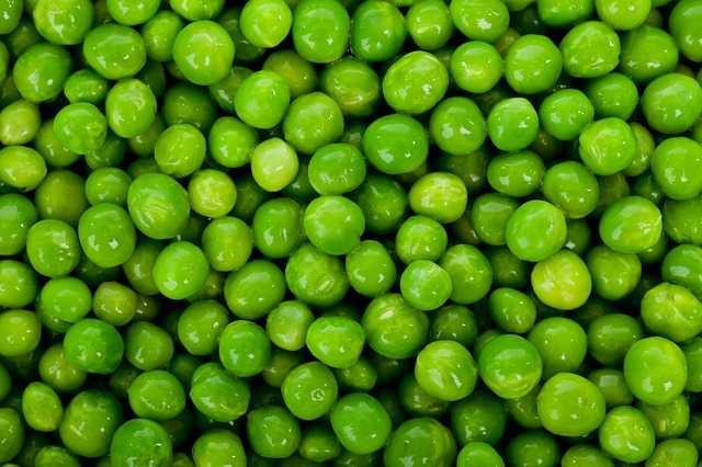 come coltivare piselli idee green