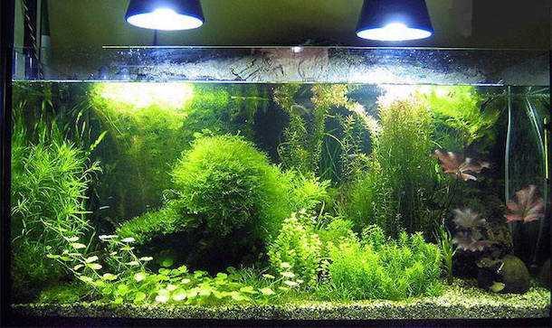 Come cambiare l 39 acqua all 39 acquario idee green for Filtro vasca pesci