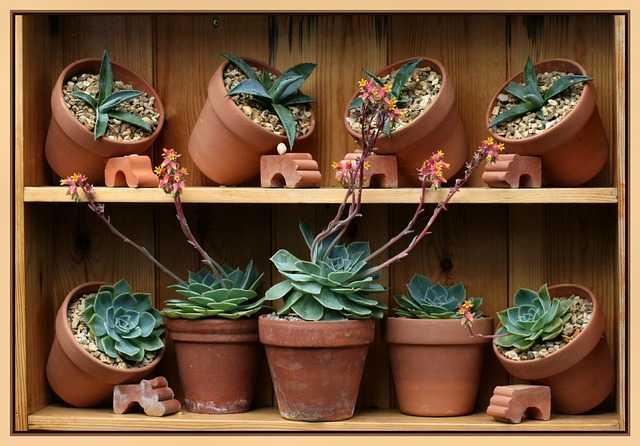 Marciume delle piante grasse
