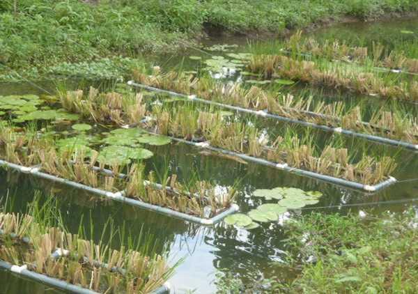 biorisanamento ambientale con microrganismi