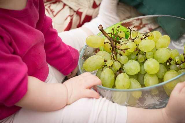 come coltivare uva da tavola