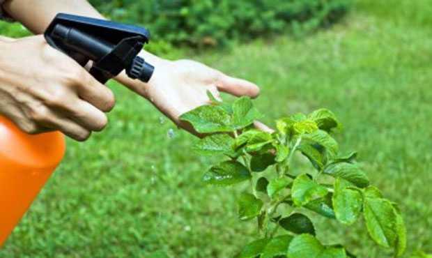 fertilizzante fai da te