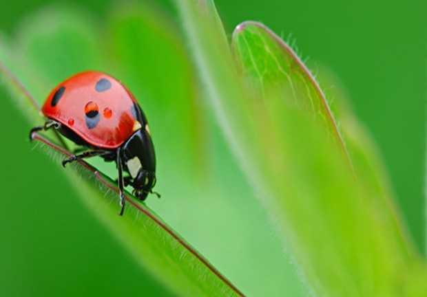piante che attirano gli insetti utili