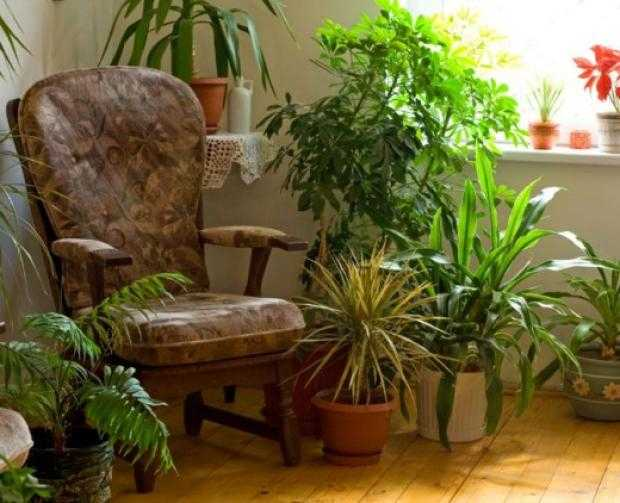 piante da interno contro inquinamento