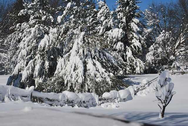 togliere la neve dalle piante
