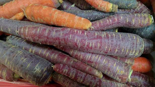 carota viola semi origini storia ricette