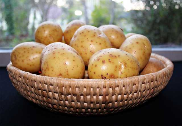 coltivare patate nei sacchi