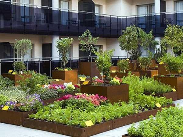 come scegliere le piante da terrazzo idee green