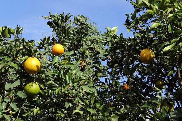 fibre di arancio