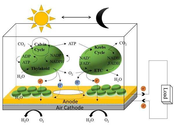 fotovoltaico biologico