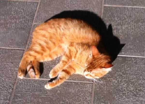 gatti rossi3